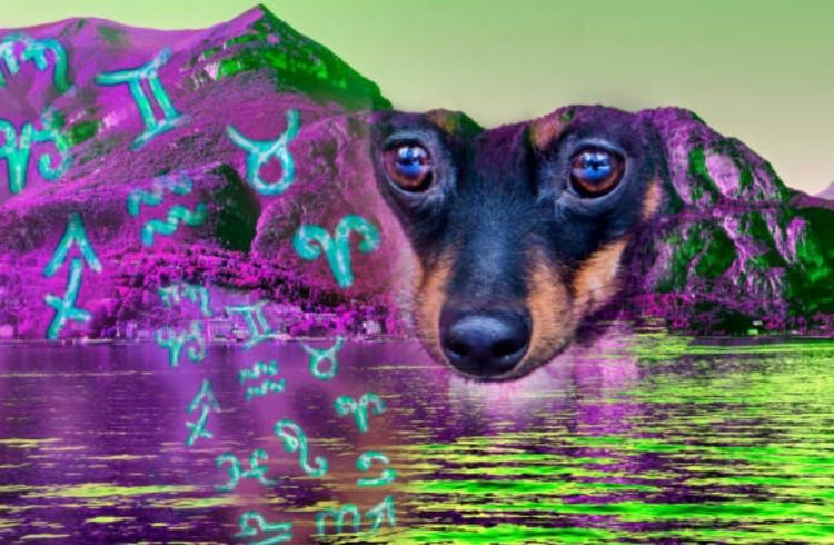 Собака-собака совместимостьфото