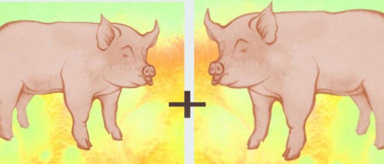 Свинья-свинья совместимость