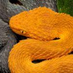 Змея-змея совместимость