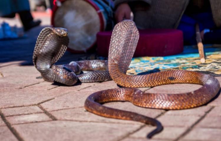 Две змеи