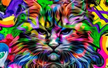 Сон кот