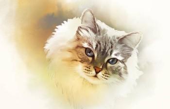 Кот сон